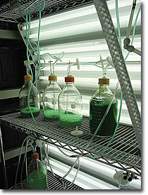 identify and develop algae strains that can be economically harvested and processed into finished transportation fuels, such as jet fuel